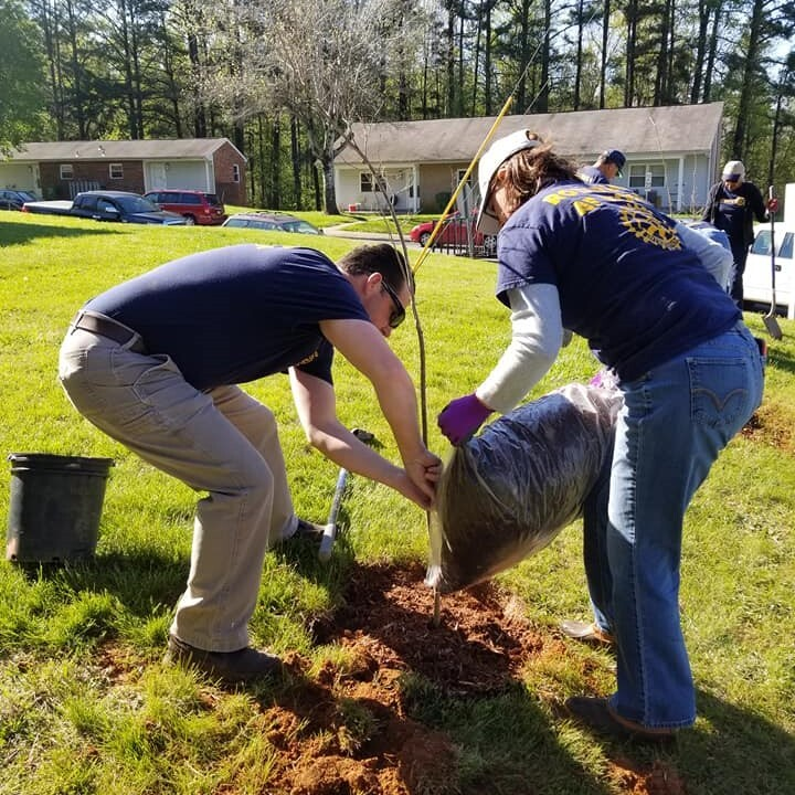 Rotarians planting a tree